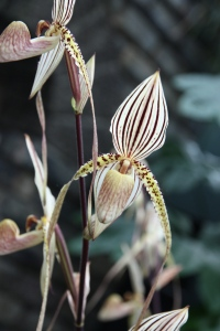 Orchid?