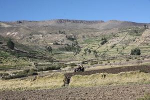 Peruvian farm