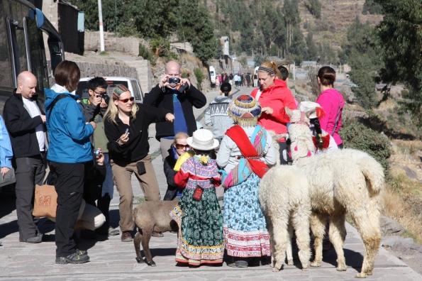 Kids and llamas
