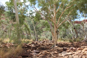 A very dry Kings Creek