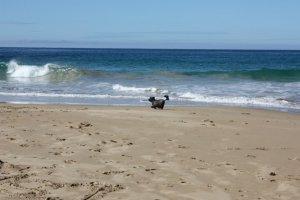 Chiyo beach