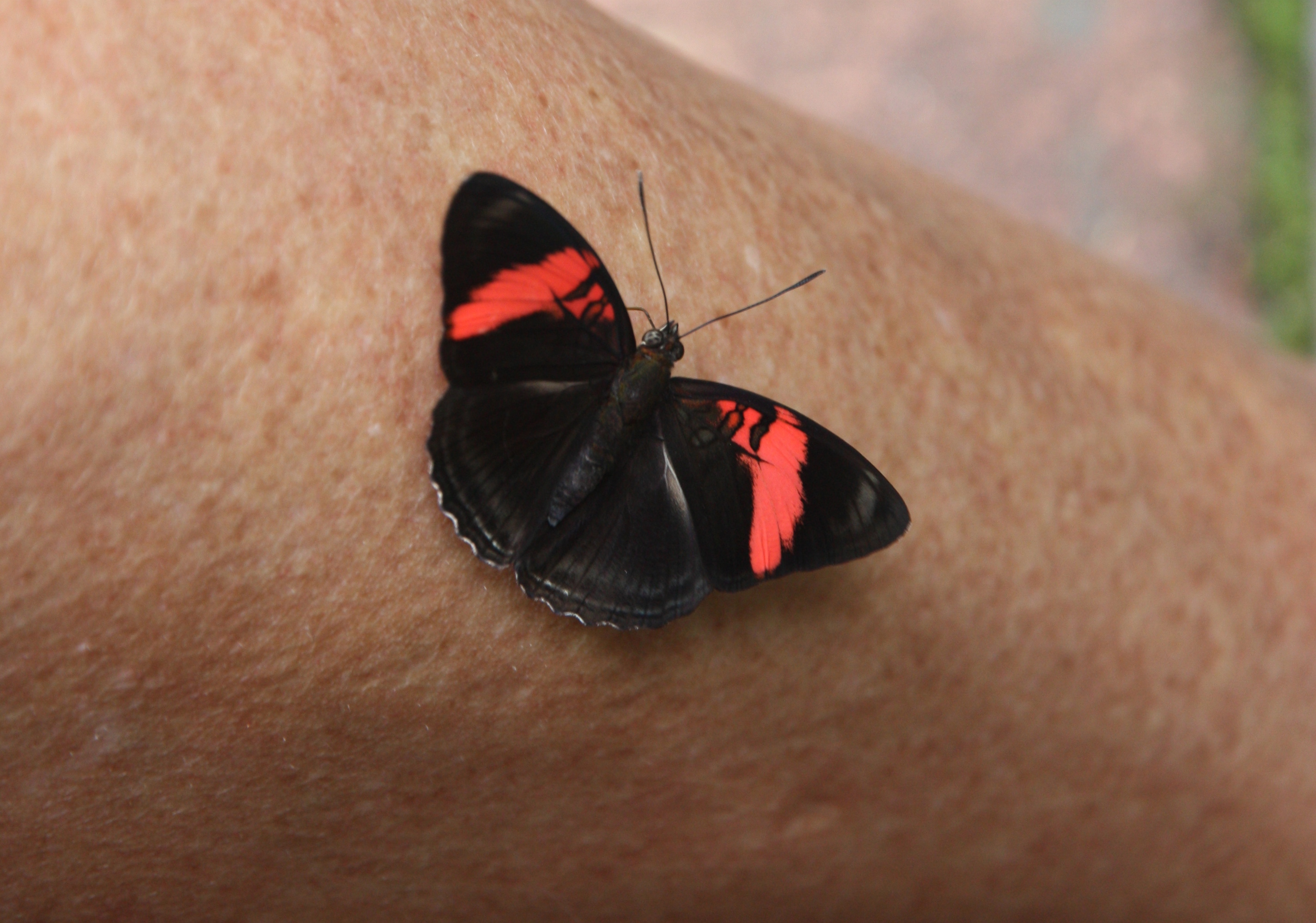 Black And Orange Butterfly Meaning
