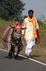 Holy Cow and priest, India