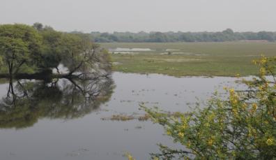 Keoladeo pond