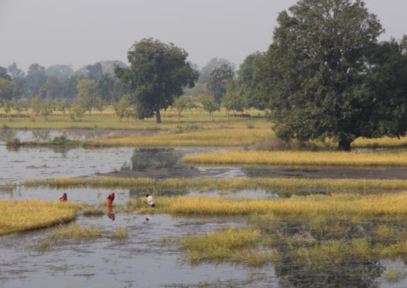 field work, India