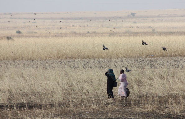 Sudanese countryside
