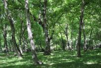 Arslanbob walnut grove