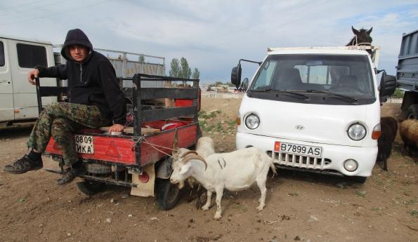 Karakol goats