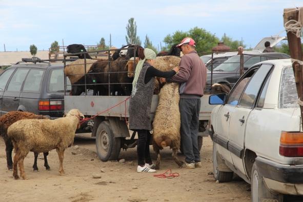 Karakol livestock