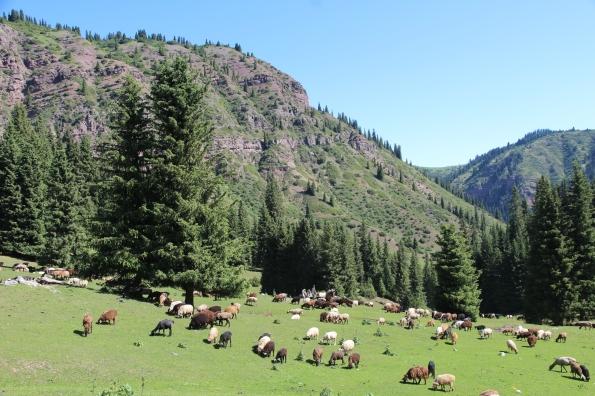 Kyrgyzstan countryside