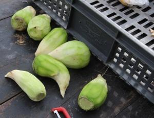turnips?