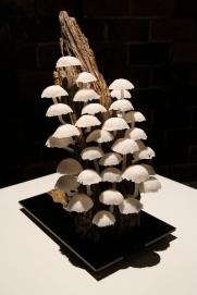 Forest Fungi 2