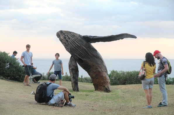 Timber whale