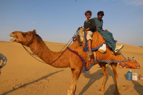 Thar Desert camel