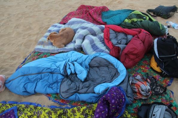 Thar Desert dog