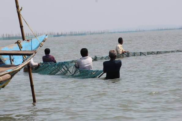 dragging in nets, Chilika