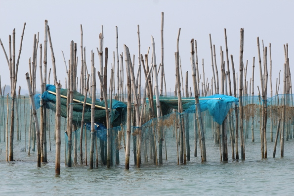 fishing nets, Chilika Lake