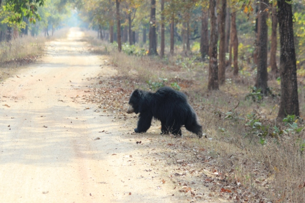 sloth bear on the run 2