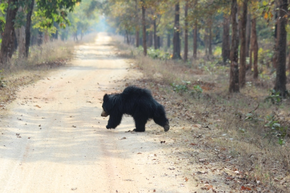 Sloth bear on the run 3