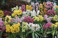 Sikkim Orchid Show