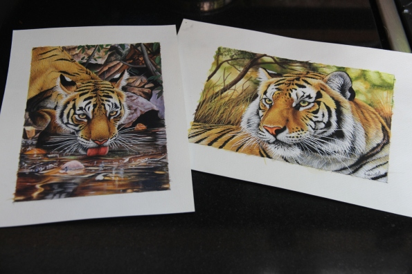 tiger watercolours