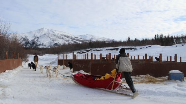 Dog mushing in Coldfoot