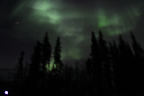 Aurora borealis with trees