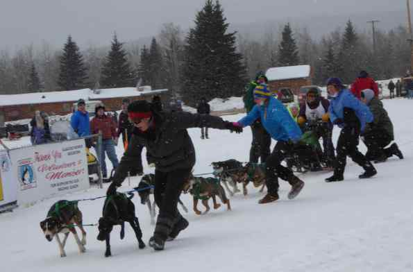 Start of a sprint dog race