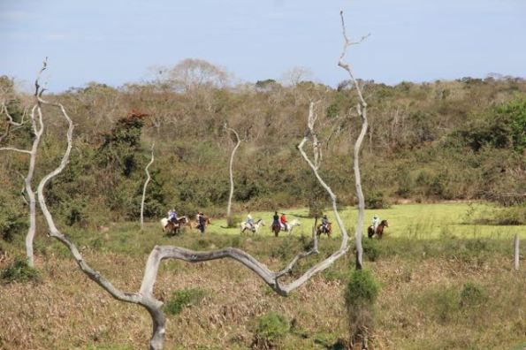 Travelling the Pantanal on horseback