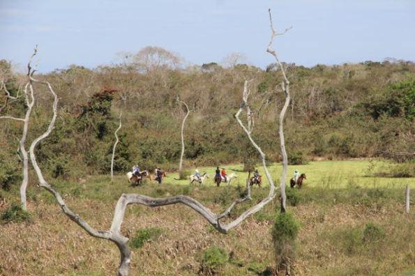 Travelling the Pantanal on horseback