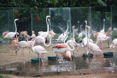 Flamingoes, Brazil