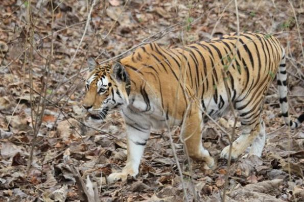 Collar Valley, Pench