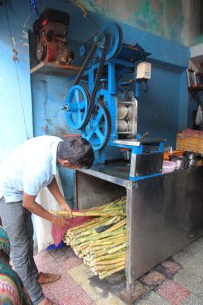 Choosing sugar canes