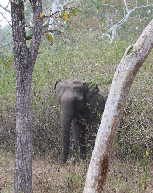 elephant between trees