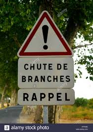 chute de branches