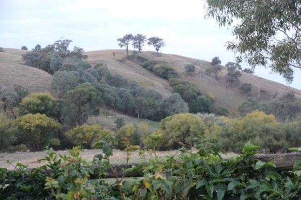 Hills near Yackandandah