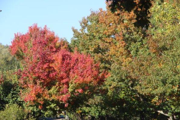 Autumn colours of Yackandandah