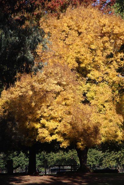 Yackandandah in autumn