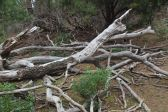 wood debris on Flinders Island