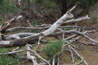 wood debris on Flinders Island