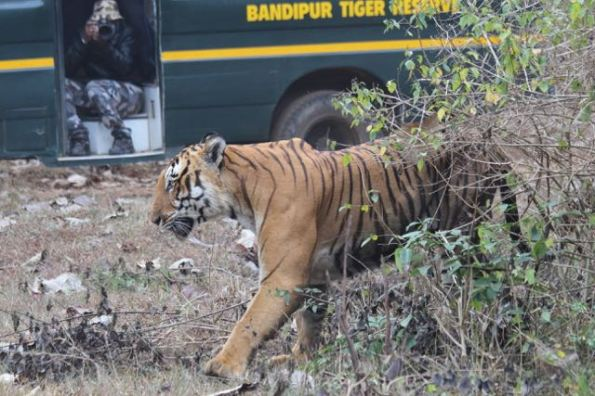 Prince in Bandipur National Park