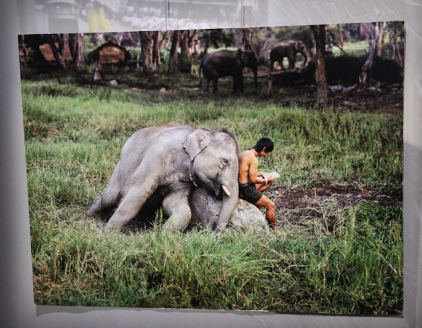 Elephant and mahout, Chiang Mai, Thailand, 2010