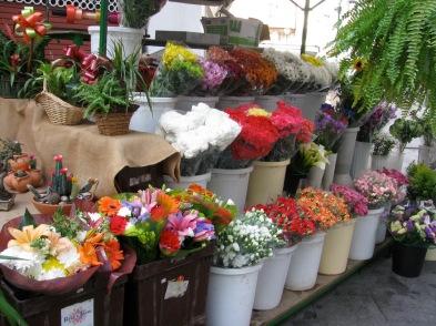 Algeciras flowers