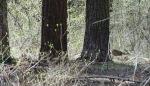 Deer in Yosemite