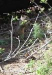 Squirrel in Yosemite