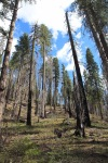 Trees in Yosemite NationalPark