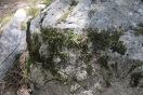Moss, Yosemite