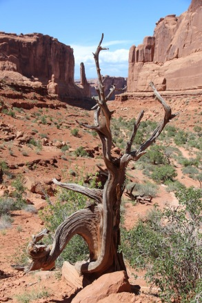 Plant life, Park Avenue, Arches National Park