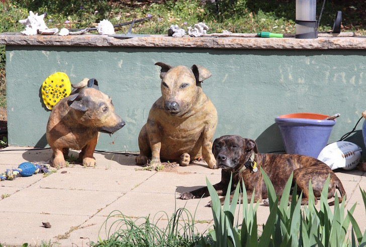 Dogs in the garden