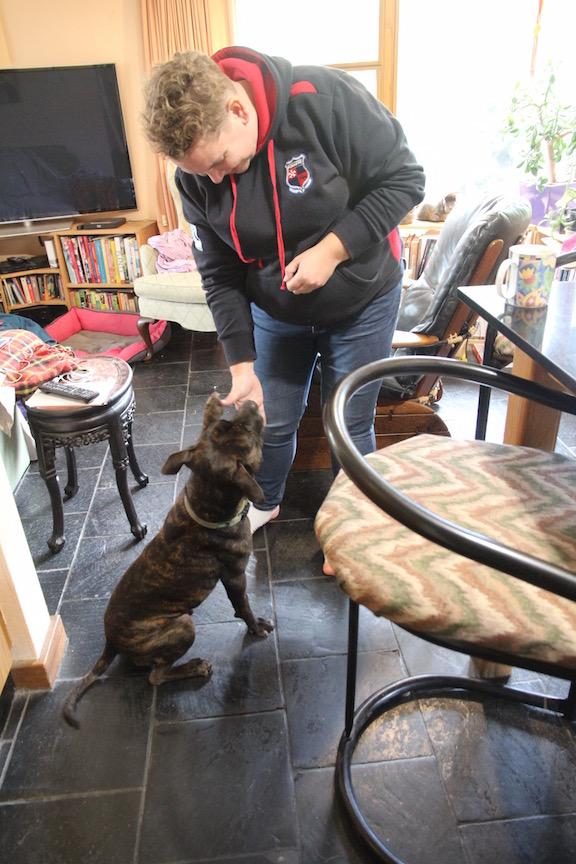 Dog shaking hands